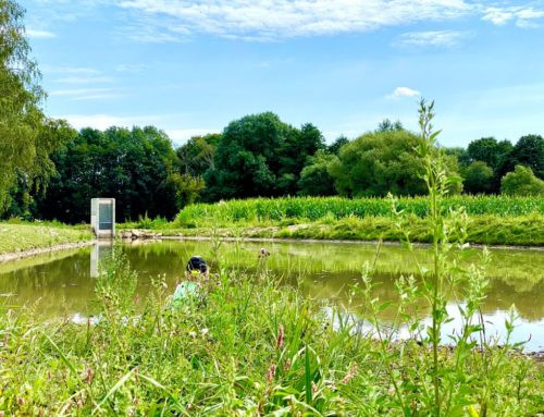 Neues vom neuen Biotop in Engertsdorf