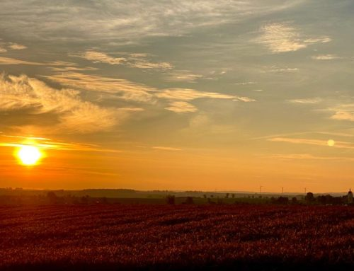 Herbststimmung, Morgensonne, Tau an frischen Saaten…
