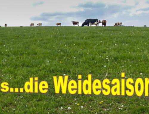 Frühling, …und raus geht`s auf die grüne Weide…